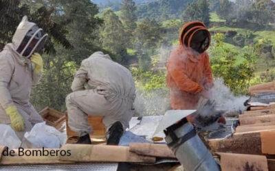 Bomberos de San Pedro atienden en promedio 12 casos al mes, relacionados con abejas