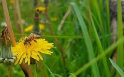 En el municipio se atienden en promedio 10 casos al mes, relacionados con abejas