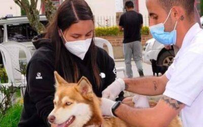 Inició la jornada de vacunación departamental contra la rabia para perros y gatos